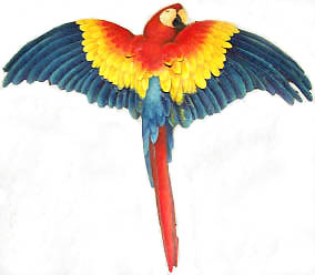 Brightly Painted Parrot Metal Wall
